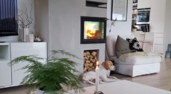 Bilde av hund foran peis